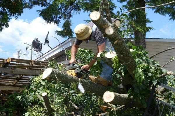toledo oh, restoration services toledo oh, toledo restoration company, storm tree damage toledo oh