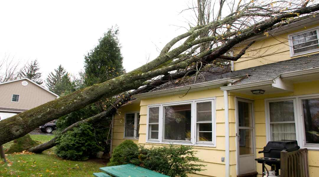 tree damage, tree damage restoration, tree damage removal, storm damage, storm damage restoration, storm damage repairs