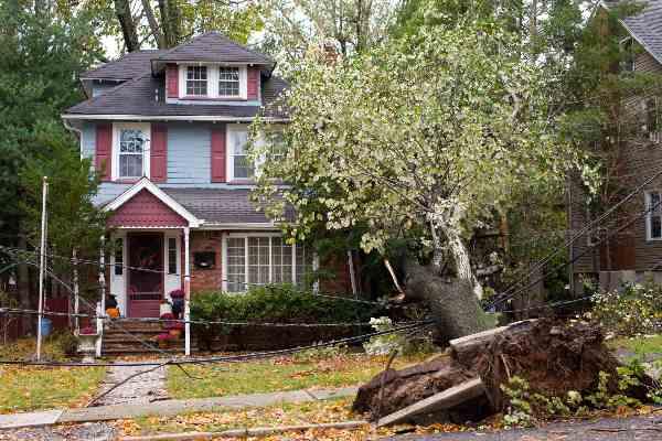 tree damage, tree damage repairs, storm damage restoration